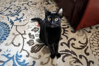 Lulu the Cat - Bill's mischievous companion