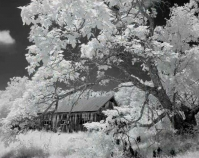 "Tree Limb and Barn Geoffrey Carr Black & white infrared photograph 30"" x 40\"" http://carr-photo.com"